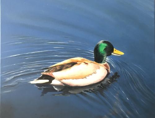 Pato en estanque